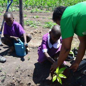 Traädplantring Kiotani Lukenya Hills