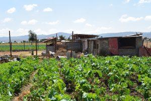 grönsaker Kiotani Kenya