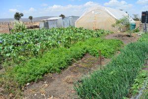 Lukenya Hills Grönsaker