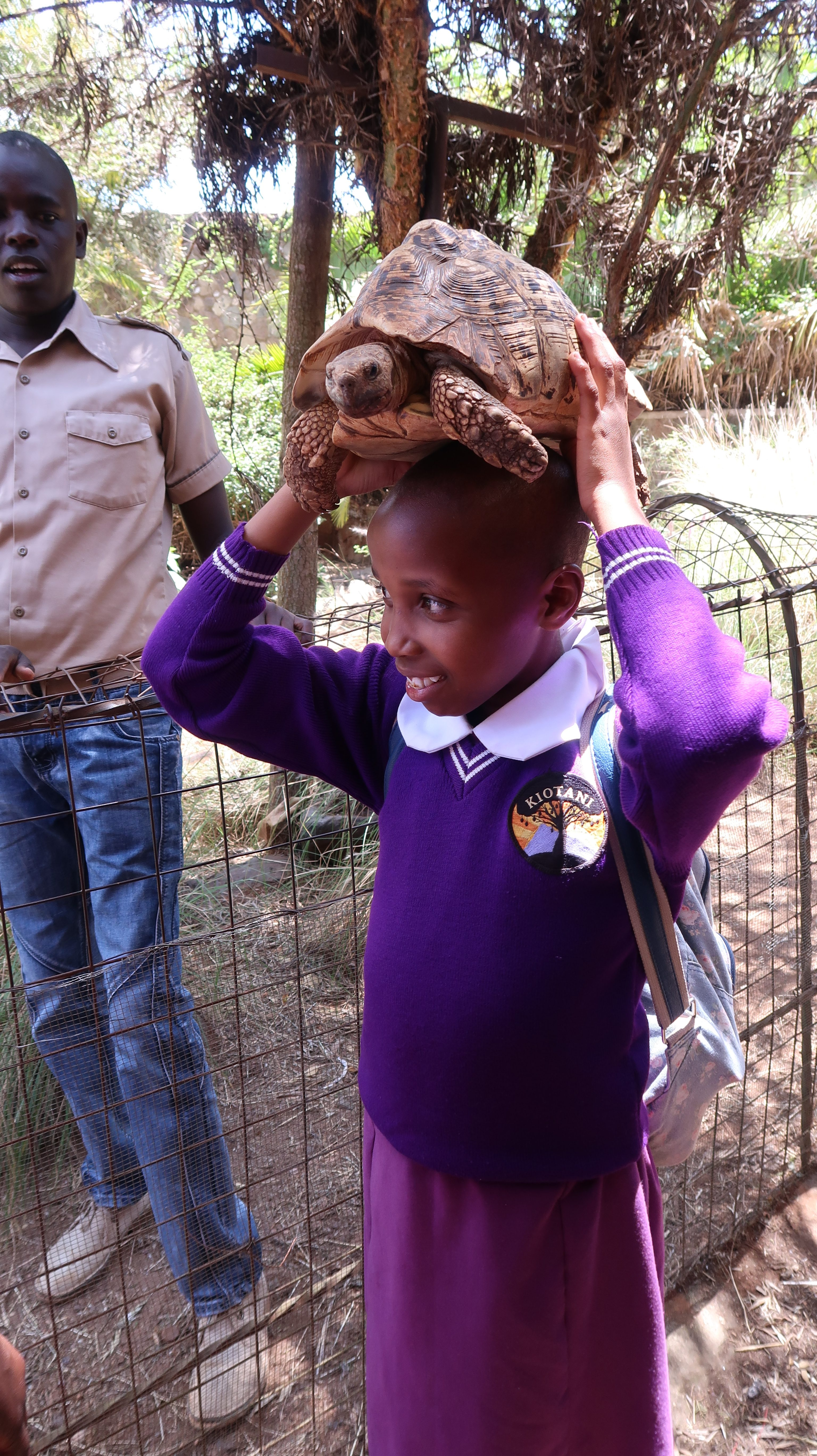 Sköldpaddor i Mamba Village Nairobi